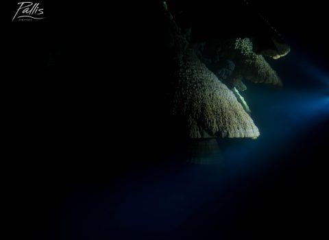 12-09-18 - Sharks (Xaman Ha)